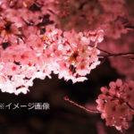 【中止】神戸市立王子動物園(兵庫) | 2021年桜祭り・夜桜ライトアップ・見頃情報