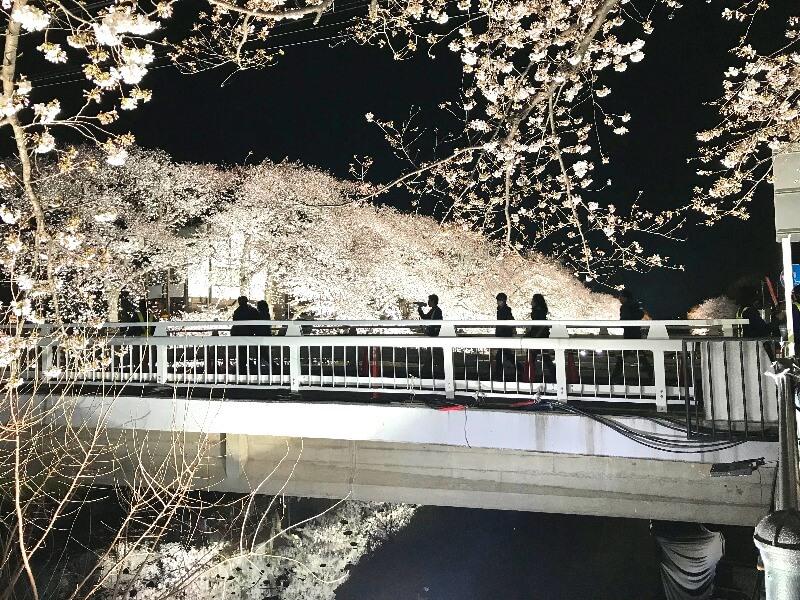 野川ライトアップ_006