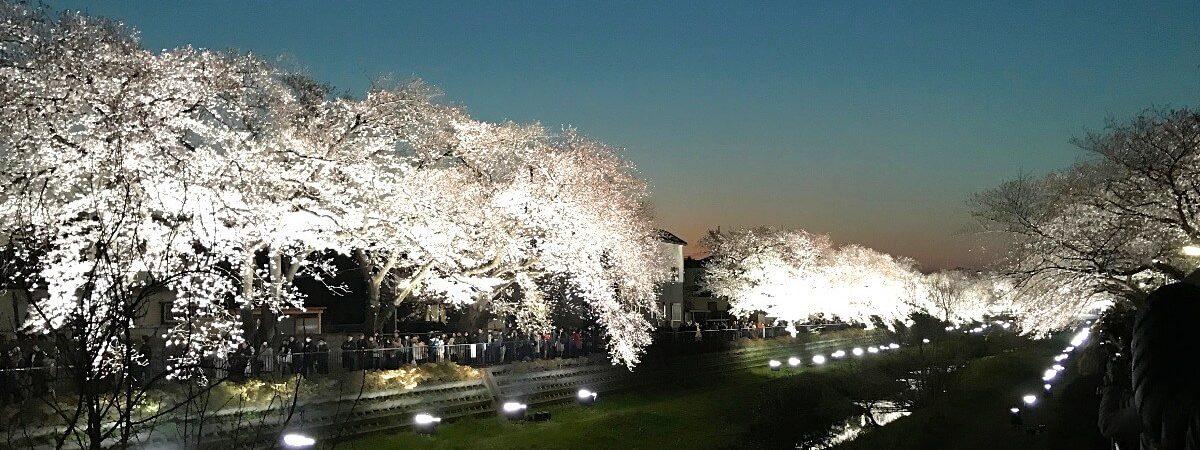 野川ライトアップ_cover