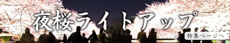 夜桜バナー