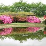 館林観光でつつじまつりや茂林寺の伝説の茶釜や歴史に触れる