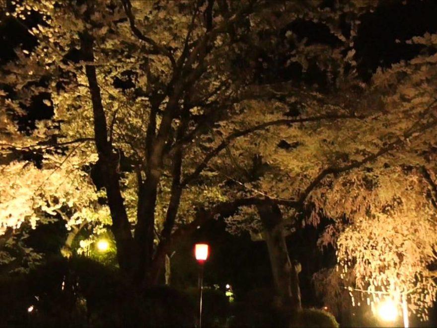 水沢公園(岩手) | 2019年夜桜ライトアップ・見頃情報
