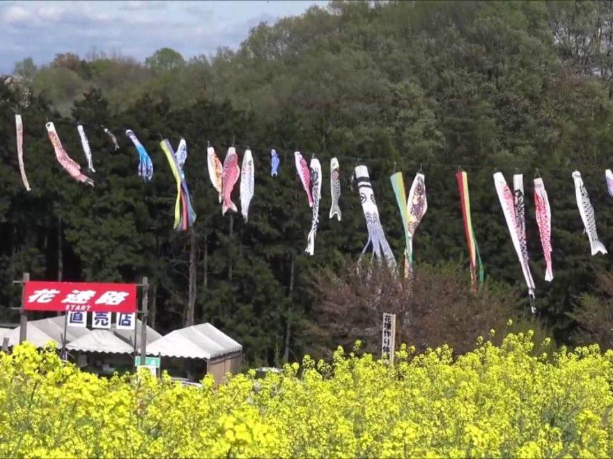 鼻高展望花の丘(群馬) | 2019年菜の花まつり・見頃情報
