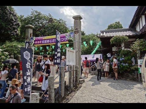 文京区 白山神社(東京) | 2019年あじさい祭り・見頃情報