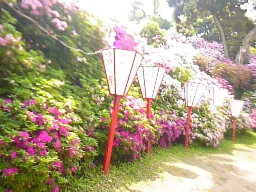 宝福寺山つつじ公園(福岡) | 2019年つつじ祭り・見頃情報