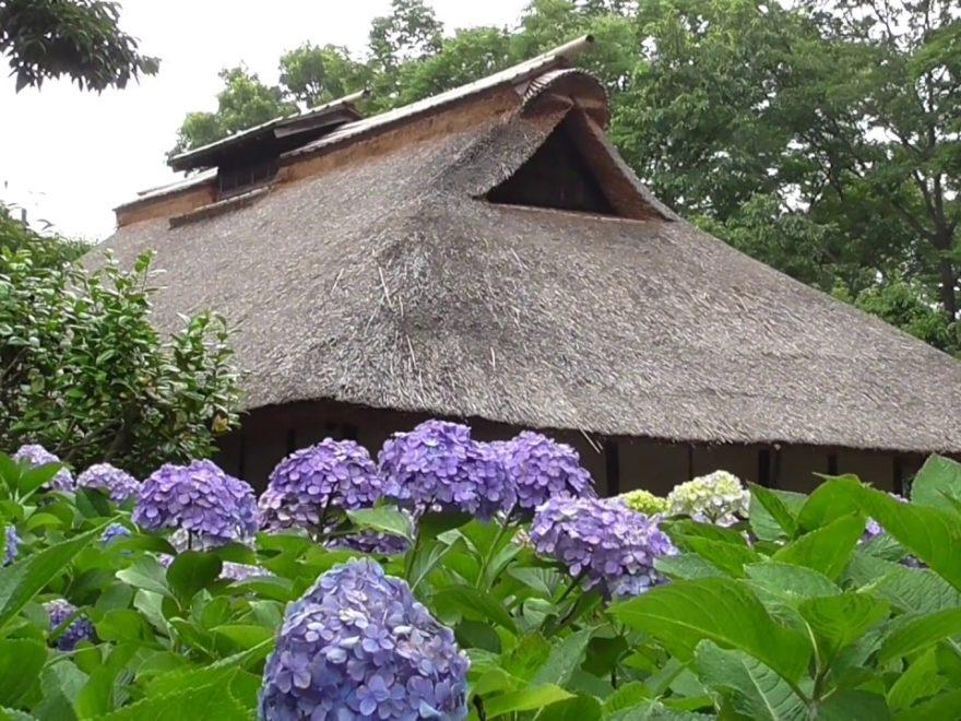 府中市郷土の森博物館(東京) | 2019年あじさい祭り・見頃情報