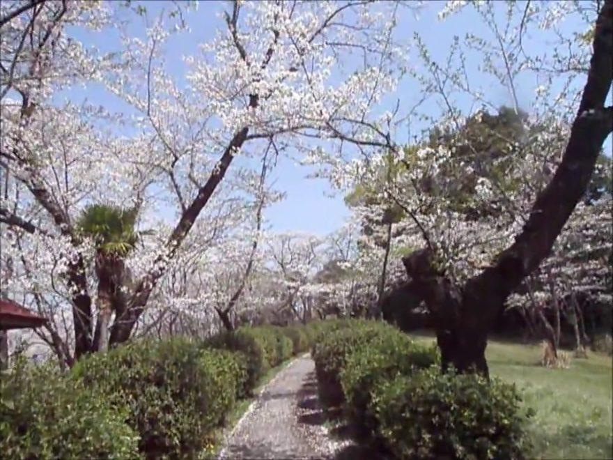 上米(かみよね)公園(宮崎) | 2019年夜桜ライトアップ・見頃情報