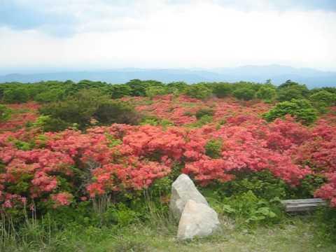 室根山(岩手) | 2019年つつじ祭り・見頃情報
