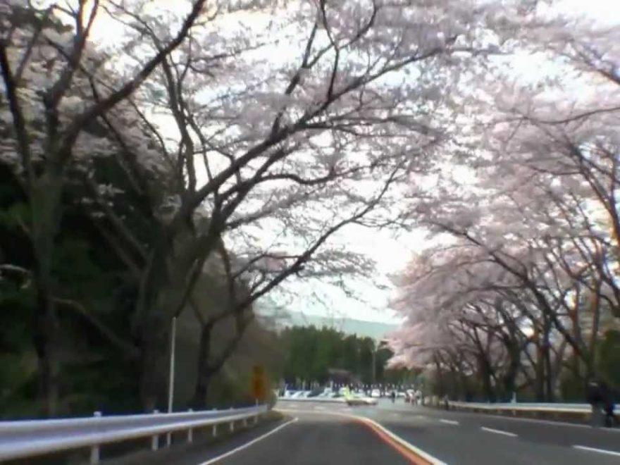 アネスト岩田 ターンパイク箱根(神奈川) | 2019年夜桜ライトアップ・見頃情報