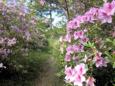 余野公園(三重) | 2019年つつじ祭り・見頃情報