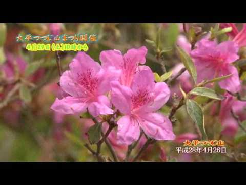 大平つつじ山(三重) | 2019年つつじ祭り・見頃情報