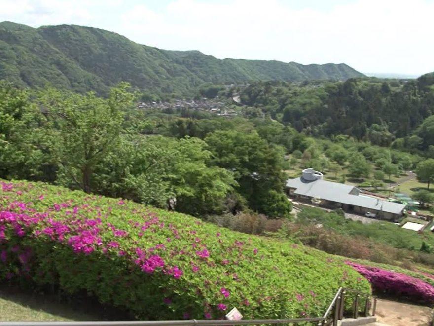 あいかわ公園(神奈川) | 2019年つつじ祭り・見頃情報