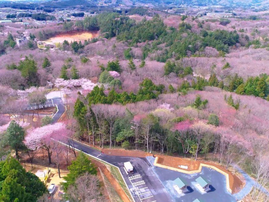 笠間市 北山公園(茨城) | 2019年夜桜ライトアップ・見頃情報
