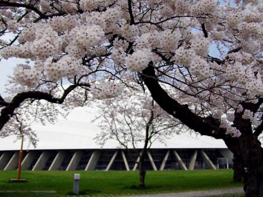 桂城公園(秋田) | 2019年夜桜ライトアップ・見頃情報