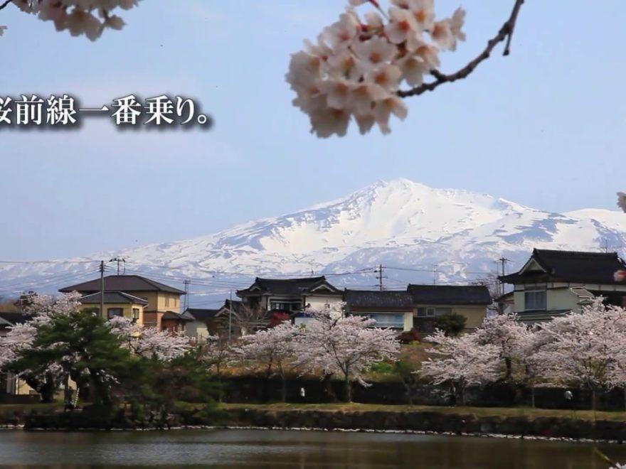 勢至公園(せいしこうえん)(秋田)   2019年夜桜ライトアップ・見頃情報