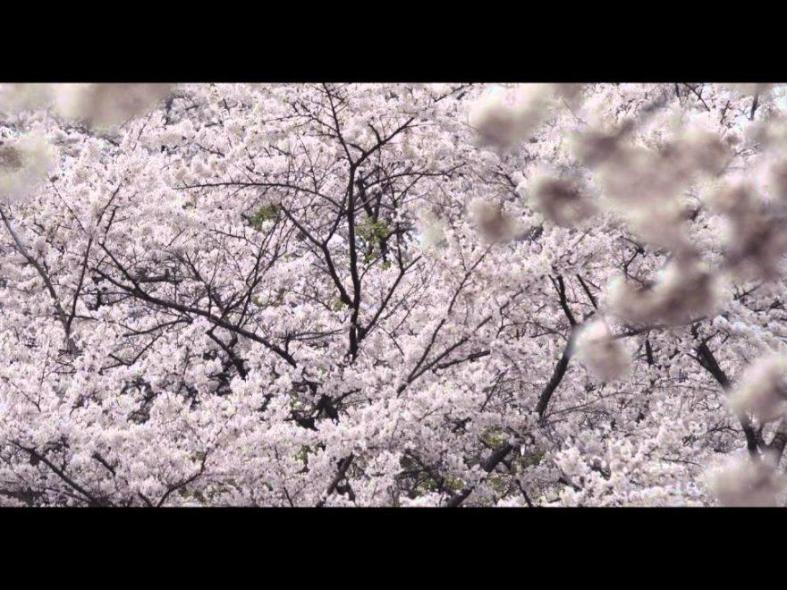 釣山公園(岩手) | 2019年夜桜ライトアップ・見頃情報