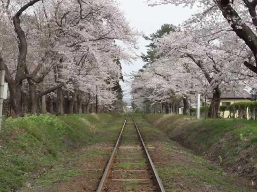 芦野公園(青森) | 2019年夜桜ライトアップ・見頃情報