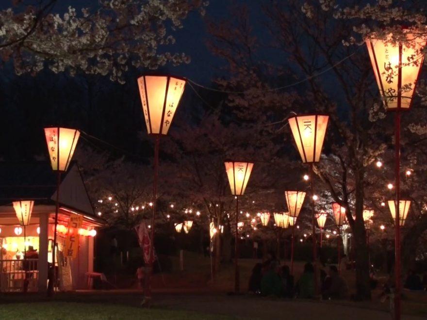 庄原市 上野公園(広島) | 2019年夜桜ライトアップ・見頃情報