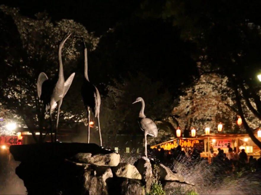 前橋公園(群馬) | 2019年夜桜ライトアップ・見頃情報