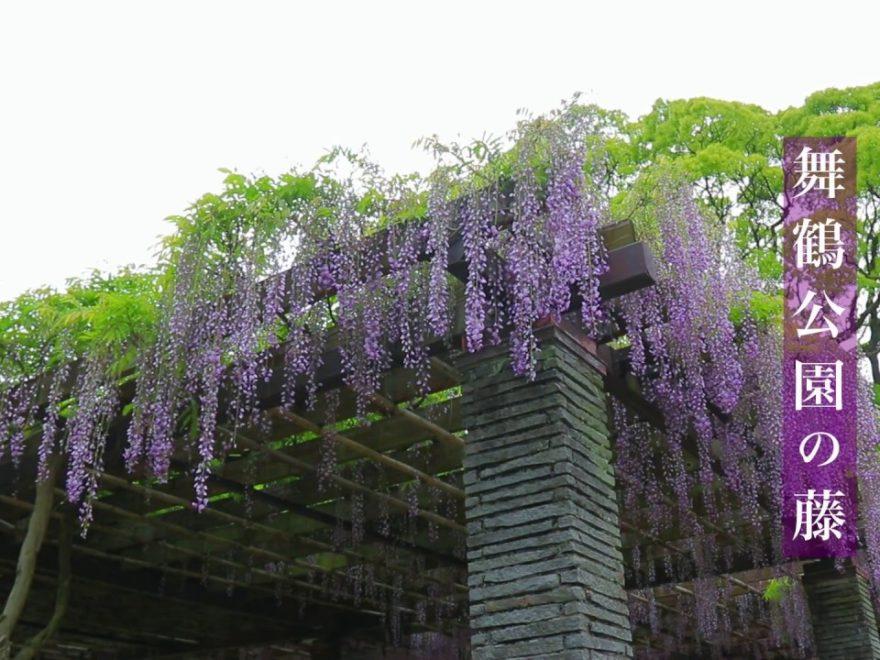舞鶴公園 藤園(福岡) | 2019年福岡城藤まつり・見頃情報
