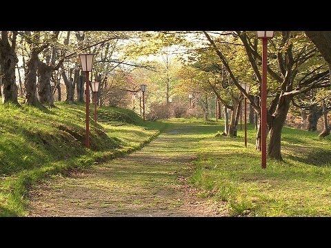 東明公園(北海道) | 2019年夜桜ライトアップ・見頃情報