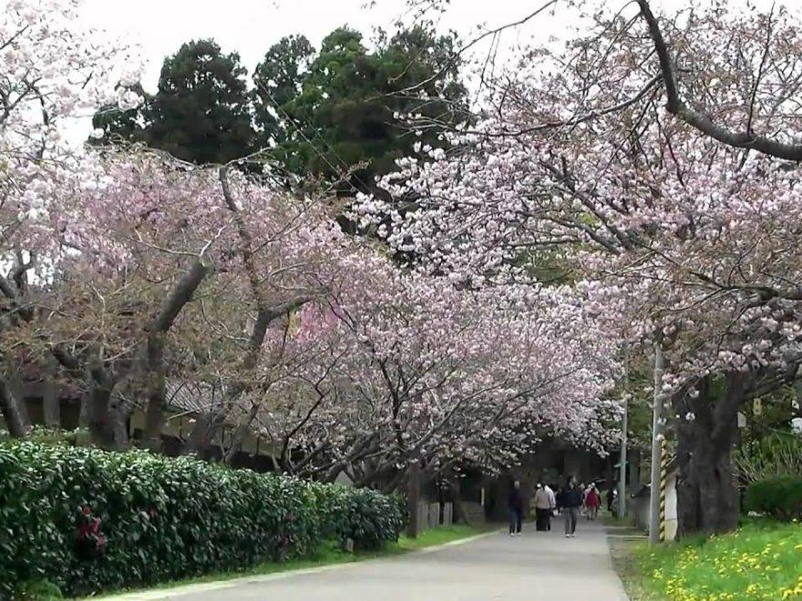 松前公園(北海道) | 2019年夜桜ライトアップ・見頃情報
