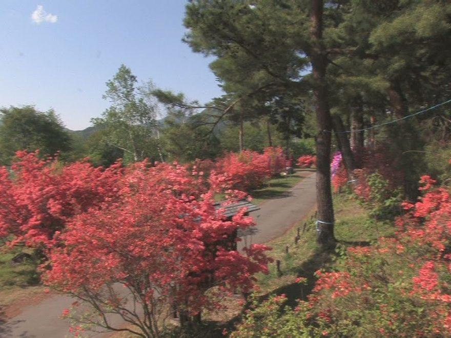 御屋敷公園(真田氏館跡)(長野) | 2019年つつじ祭り・見頃情報