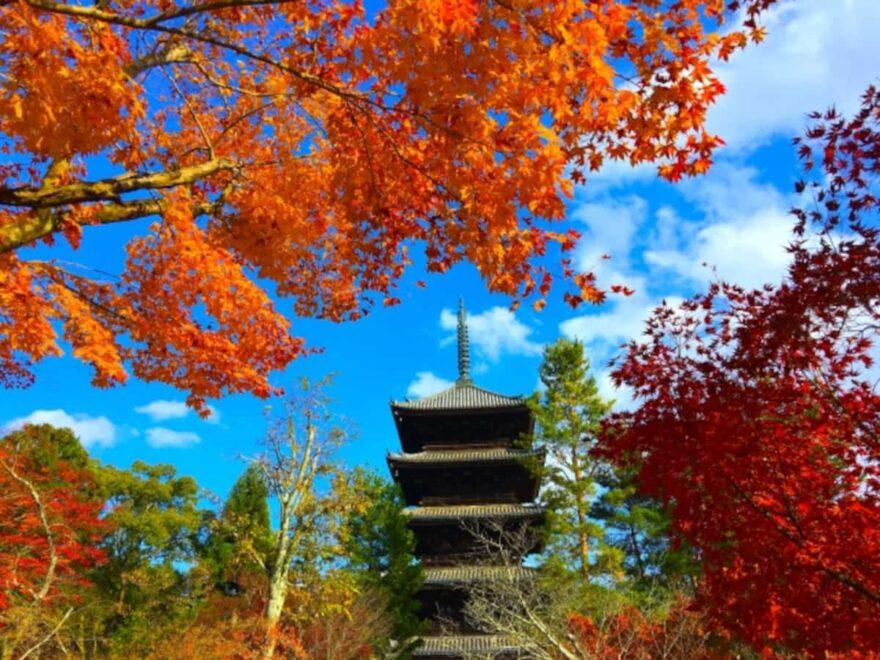仁和寺|紅葉ライトアップ