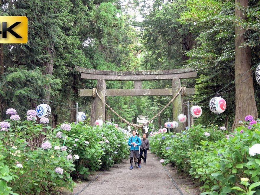 磯山神社(栃木) | 2019年あじさい祭り・見頃情報