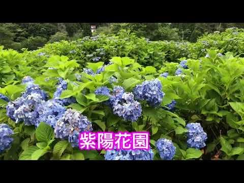 メナード青山リゾート(三重) | 2019年あじさい見頃情報