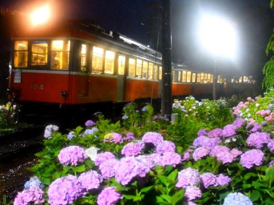 箱根登山鉄道『夜のあじさい号』(神奈川) | 2019年ライトアップイベント情報