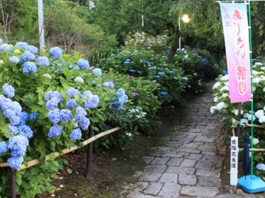 出塩文殊堂(山形) | 2019年あじさい祭り・見頃情報
