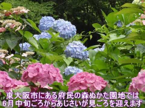 ぬかた園地(大阪府民の森)(大阪) | 2019年あじさい祭り・見頃情報