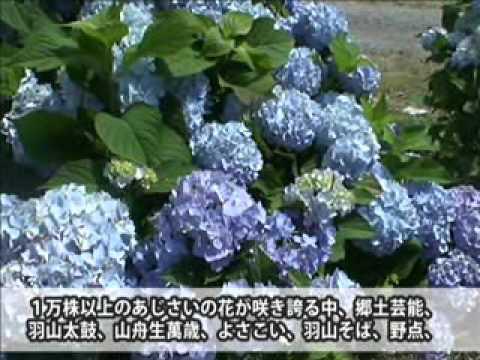 くぼたあじさい公園(福島) | 2019年あじさい祭り・見頃情報