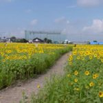 【中止】ひょうたん島公園(佐賀) | 2021年ひまわり祭り・見頃情報