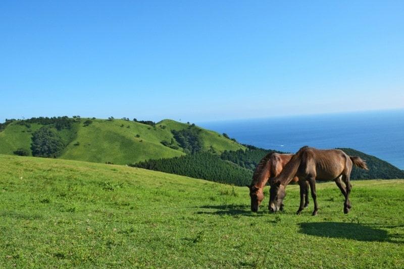 都井岬と馬1