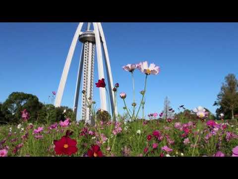 国営木曽三川公園 138タワーパーク(愛知) | 2019年コスモス祭り・見頃情報