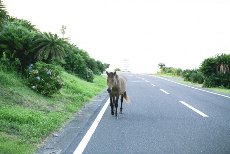 都井岬と馬2(沿道)