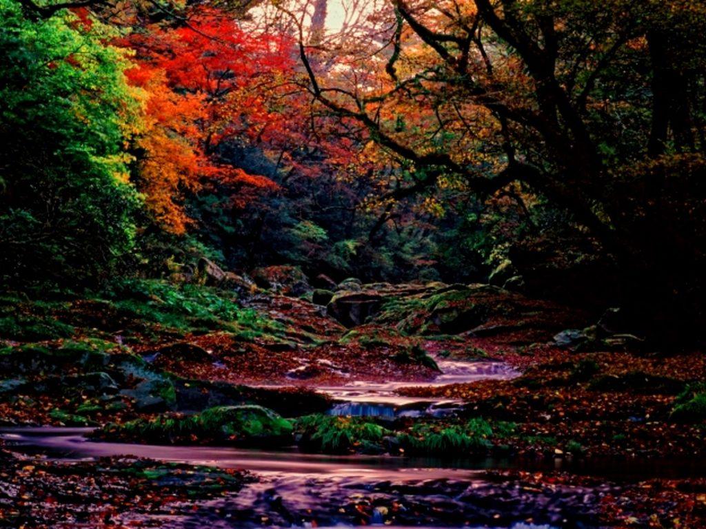 菊池渓谷紅葉