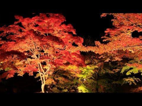 松島・円通院(宮城) | 2019年紅葉ライトアップ情報