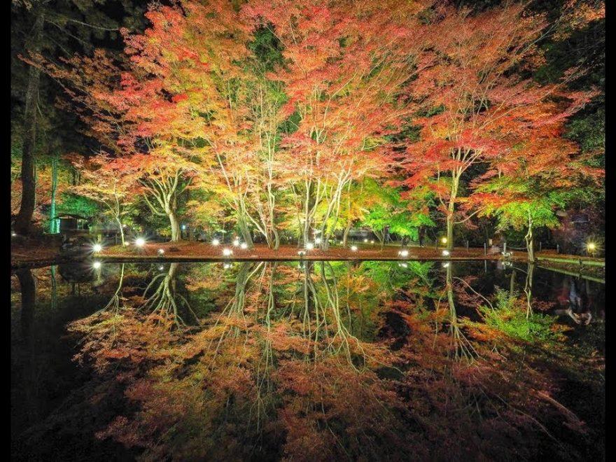 曽木公園(岐阜) | 2019年紅葉ライトアップ情報