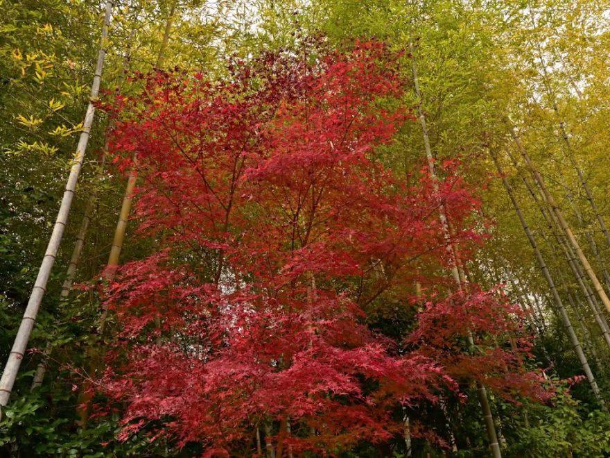 三景園(広島) | 2019年紅葉ライトアップ情報