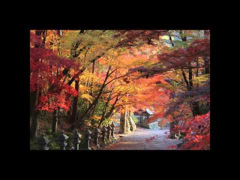 胡宮神社(このみやじんじゃ)・大瀧神社(滋賀) | 2019年紅葉ライトアップ情報