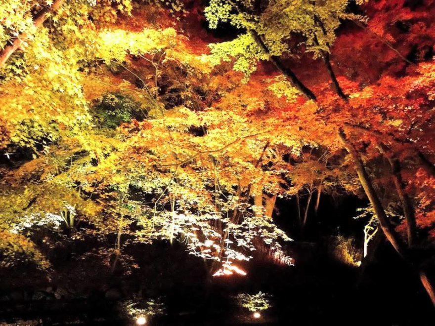 北野天満宮 史跡御土居のもみじ苑(京都) | 2019年紅葉ライトアップ・見頃情報
