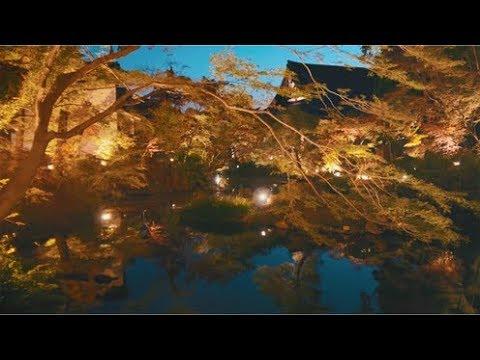 くろ谷 金戒光明寺(京都) | 2019年紅葉ライトアップ・見頃情報