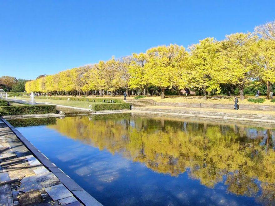 昭和記念公園(東京) | 2019年紅葉ライトアップ・見頃情報