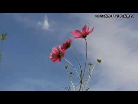 道の駅 田切の里(長野) | 2019年コスモス祭り・見頃情報