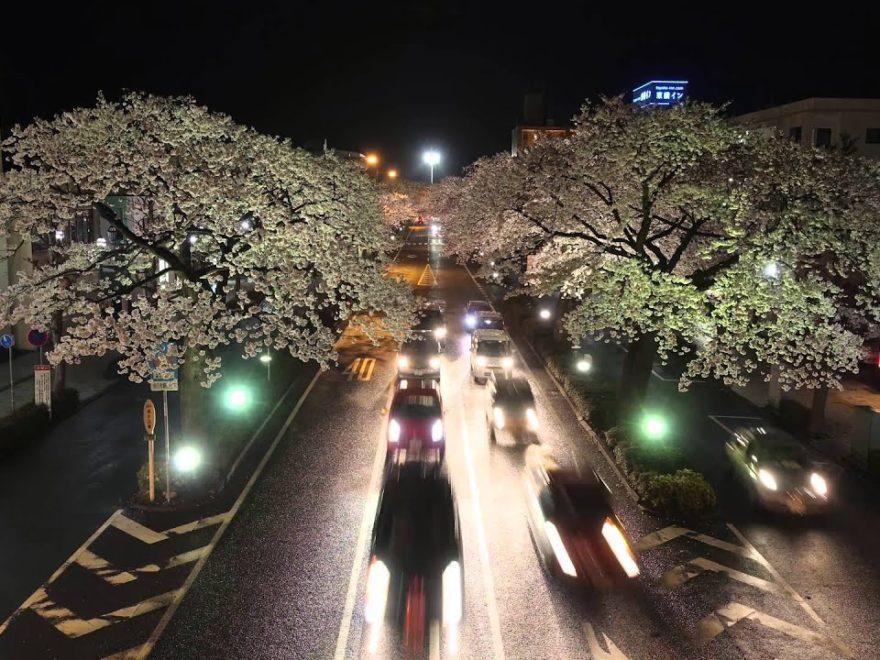 平和通り・かみね公園・十王パノラマ公園(茨城県日立市) | 2020年桜祭り・夜桜ライトアップ・見頃情報