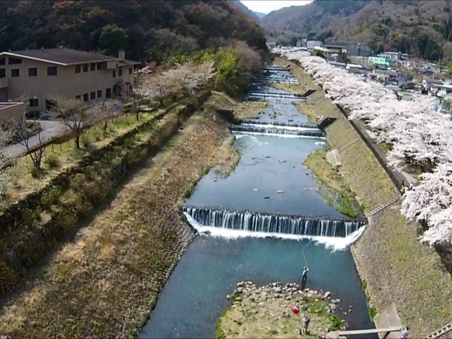 宮城野早川堤(神奈川) | 2020年桜祭り・夜桜ライトアップ・見頃情報