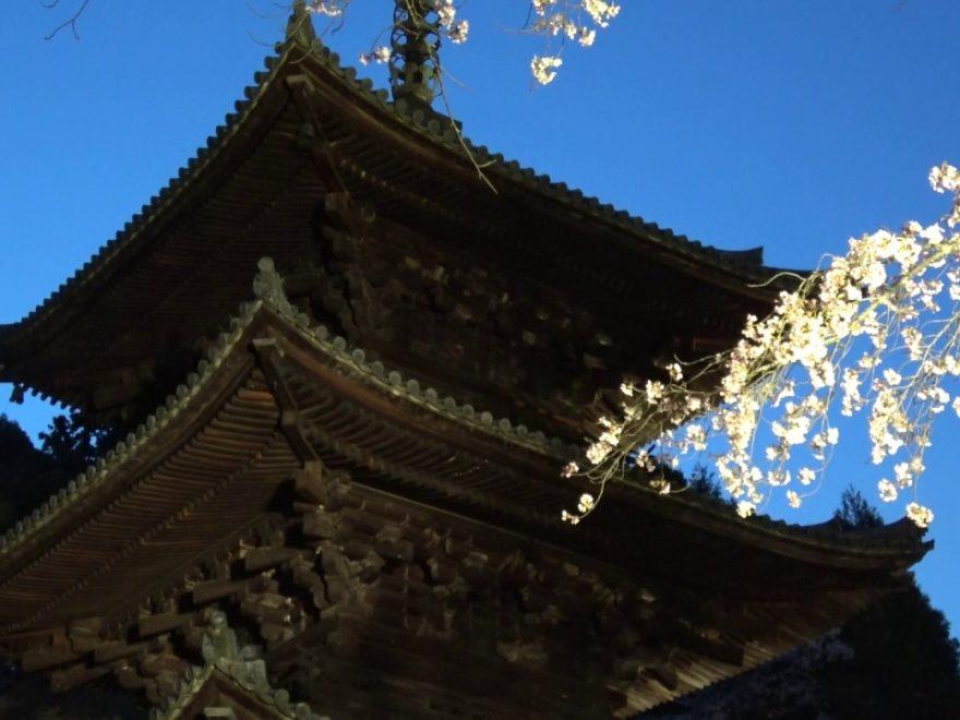三井寺(園城寺)(滋賀) | 2020年桜祭り・夜桜ライトアップ・見頃情報